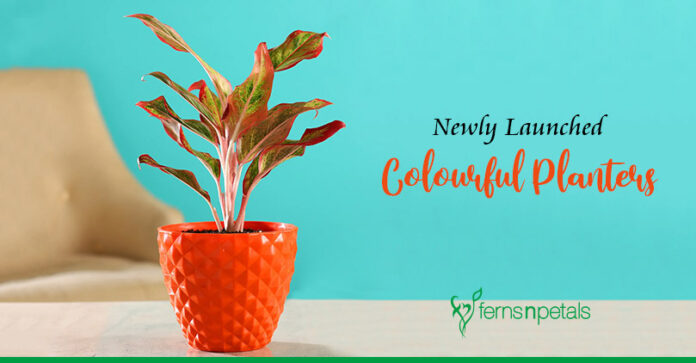 Newly-Launched Colourful Planters