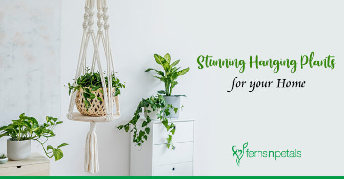 5 Hanging Plants to Spruce Up your Home Decor