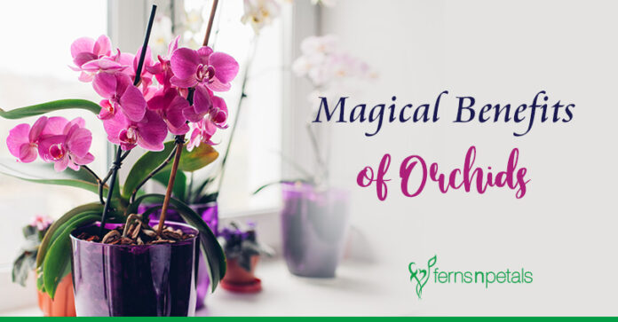 Magical Benefits & Uses of Orchids