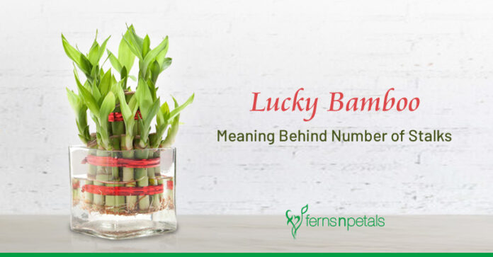 Lucky Bamboo: Meaning Behind Number of Stalks